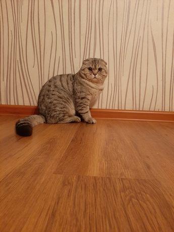 Ищу себе киску для создания котят