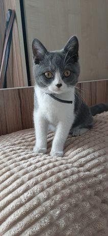 Потерялся кот бело-серый