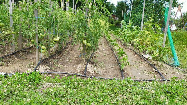 Servicii de grădinărit