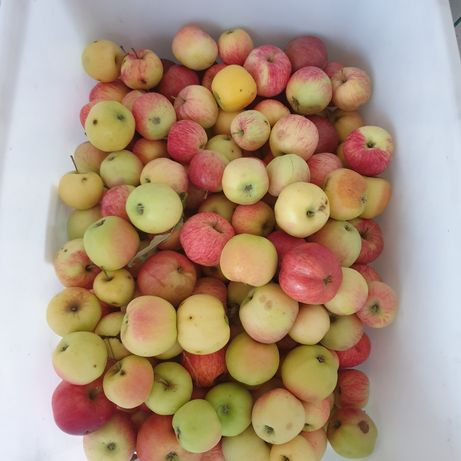 Яблоки из огорода