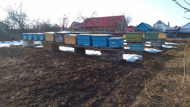 de vanzare sau schimb familii albine