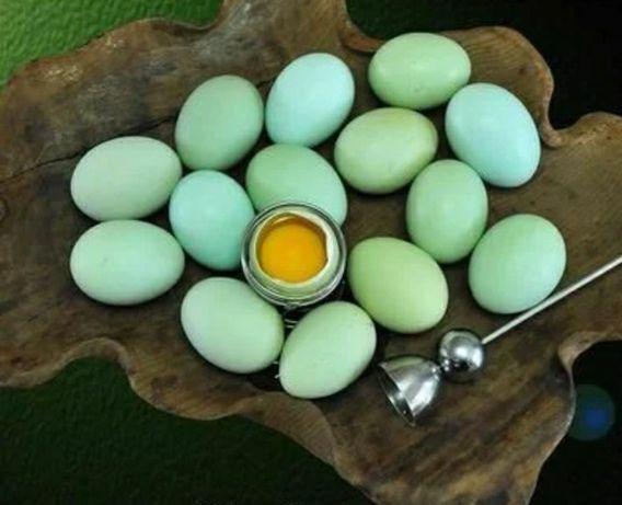 Инкубационное яйцо Ухейилюй, Лакеданзи
