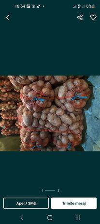 Cartofi consum samanta De Covasna