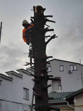 Tăiere copaci alpinist utilitar evaluare pe watap