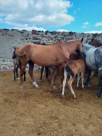 Продам 6 головы лошадей