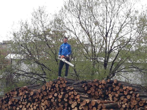 Режа дърва и опасни дървета