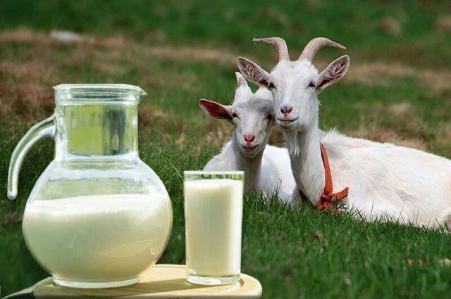 Козье, натуральное молоко.