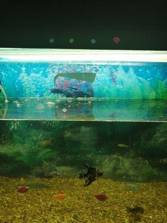 Продам аквариум 96 литров