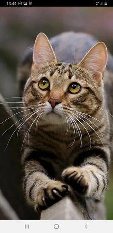 Кастрированый котик ищет дом
