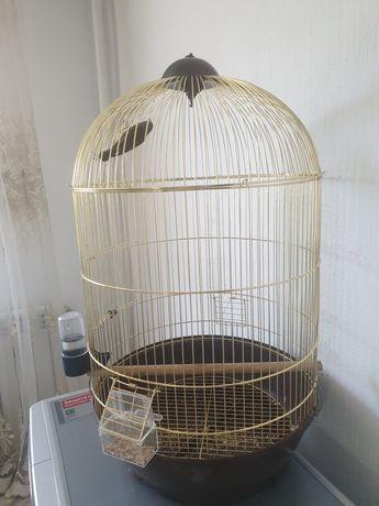 Канарейка , птичка