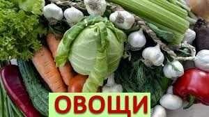 помидоры, картофель, морковь, свекла, лук, арбузы, дыни, чеснок и т.д.