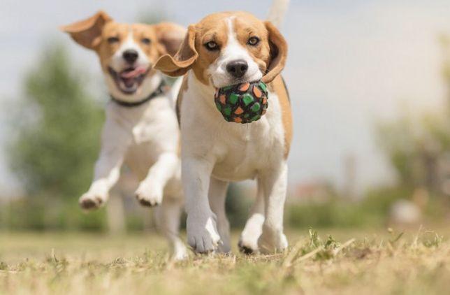 Plimb ori ce rasă de câine
