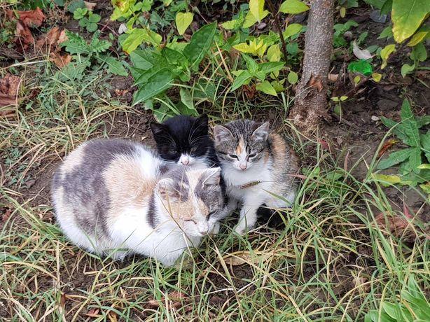 Două pisici mature și doi pisici spre adopție -  împreună sau separat.