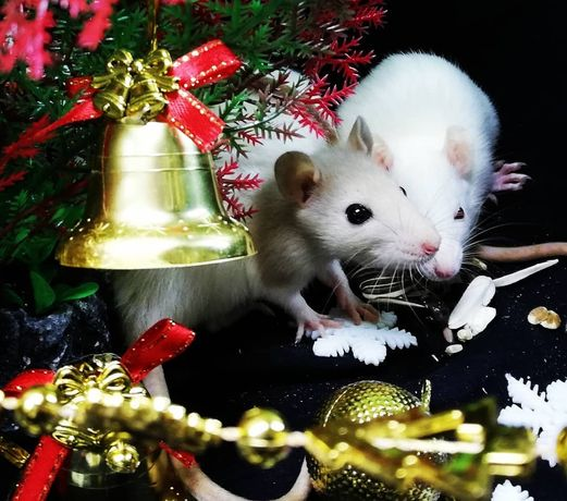 Крысята Декорашки
