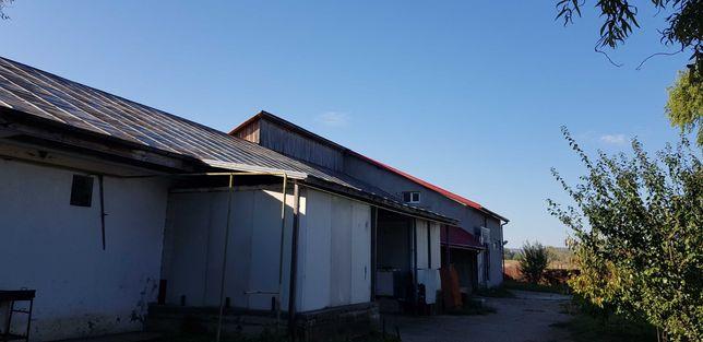 Vanzare hala de productie/carmangerie- comuna Berca, judetul Buzau