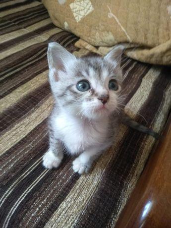 Котёнок в добрые руки.