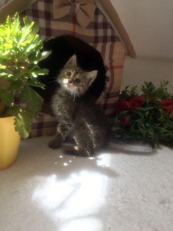 Котенок-девочка Мишель ищет семью
