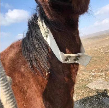 GPS Для лошадей и животных/Жылкыга ЖПС до 100дней есть приложение