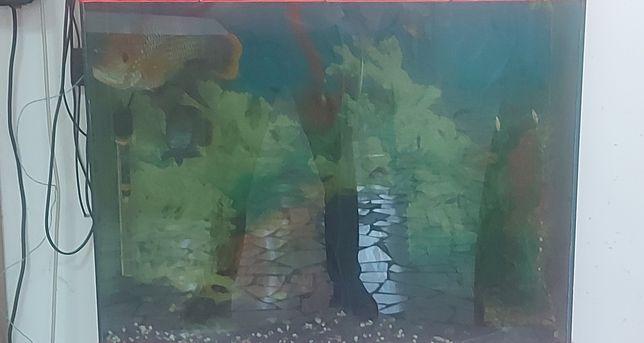 Продается аквариум с рыбками.