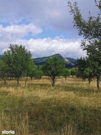 Baia Sprie,vind 51,5ari teren intravilan,zona locuita,60000euro neg.