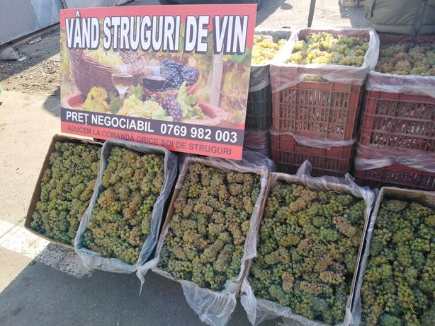 Vindem struguri pentru vin toate soiurile, în Tg Mureș,