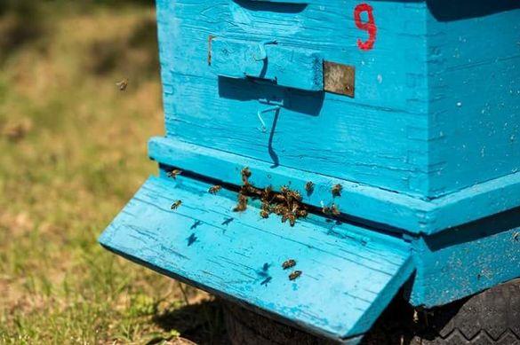 мед пчелен от Розовата долина