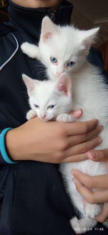 Котятки бесплатно