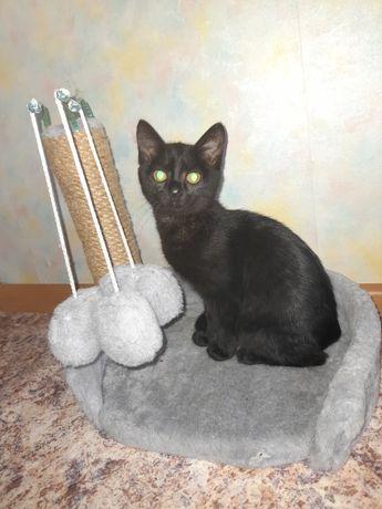 Отдам котёнка в хорошие руки 6 месяцев , цветом чёрная, девочка