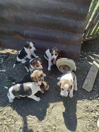 Продажа охотничьих собак