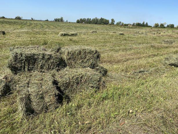 Продам сено луговое разнотравие тюк