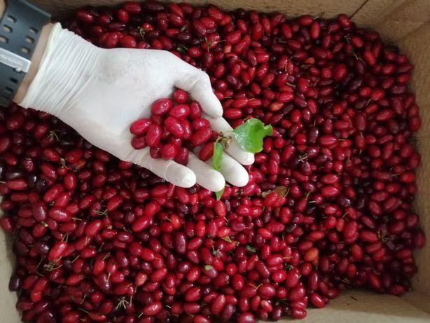 Fructe de pădure Coarne de pădure