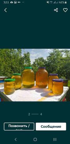 Продам мёд этого года