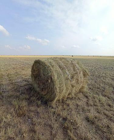 Рулоны сена 300кг