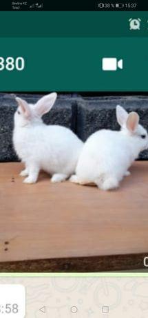 Декоративные кролики 1500