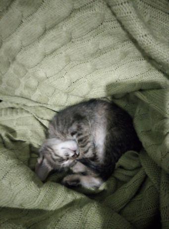Котенок девочка 2 мес. Мысык кыз 2 ай