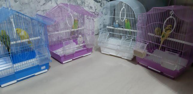 Papagali ( perusi ) multicolori