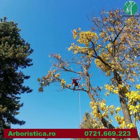 Alpinisti utilitari taiere arbori copaci uscati periculosi inalti Cluj