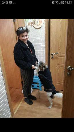 Собачка  Боня молодая стерилизованная  ищет дом
