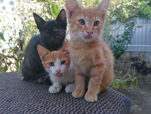 Pisici spre adopție
