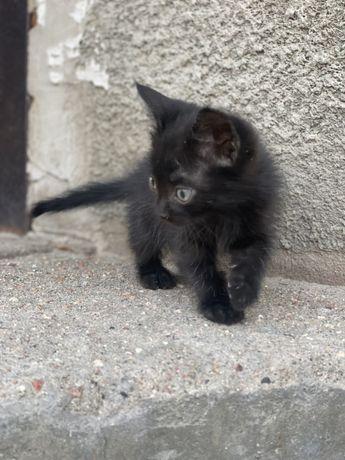 Чёрный котёнок ждет своего хозяйна!