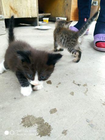 В хорошие руки котята мальчики и девочки