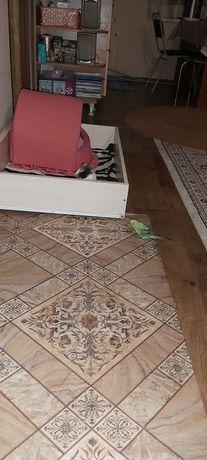 Попугай волнистый зелёный
