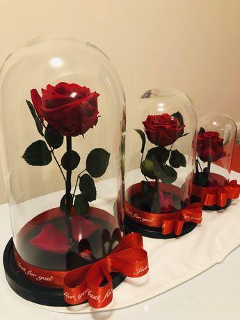 Trandafiri criogenati parfumati