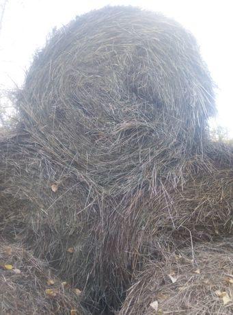 Продам сено в рулонах вес 300 350 кг