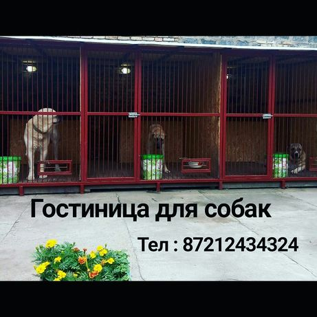 Гостиница передержка для ВЗРОСЛЫХ собак, 3.000тн в сутки