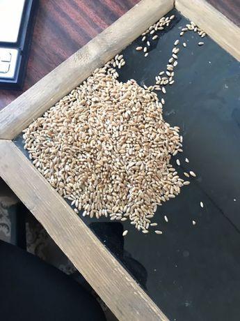 Пшеница Ячмень Соя Сафлор Арпа Бидай