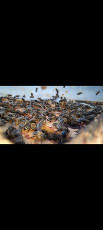 Vând Miere de albine
