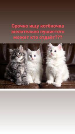Срочно котеночка