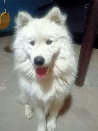 Пропала собака. Потерялся друг семьи