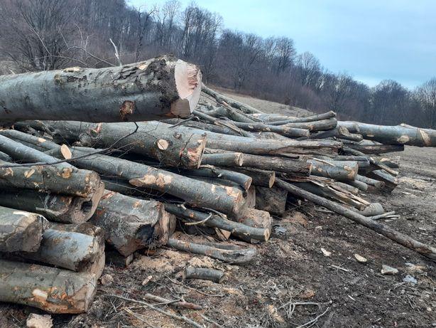 Vînd lemn de foc fag
